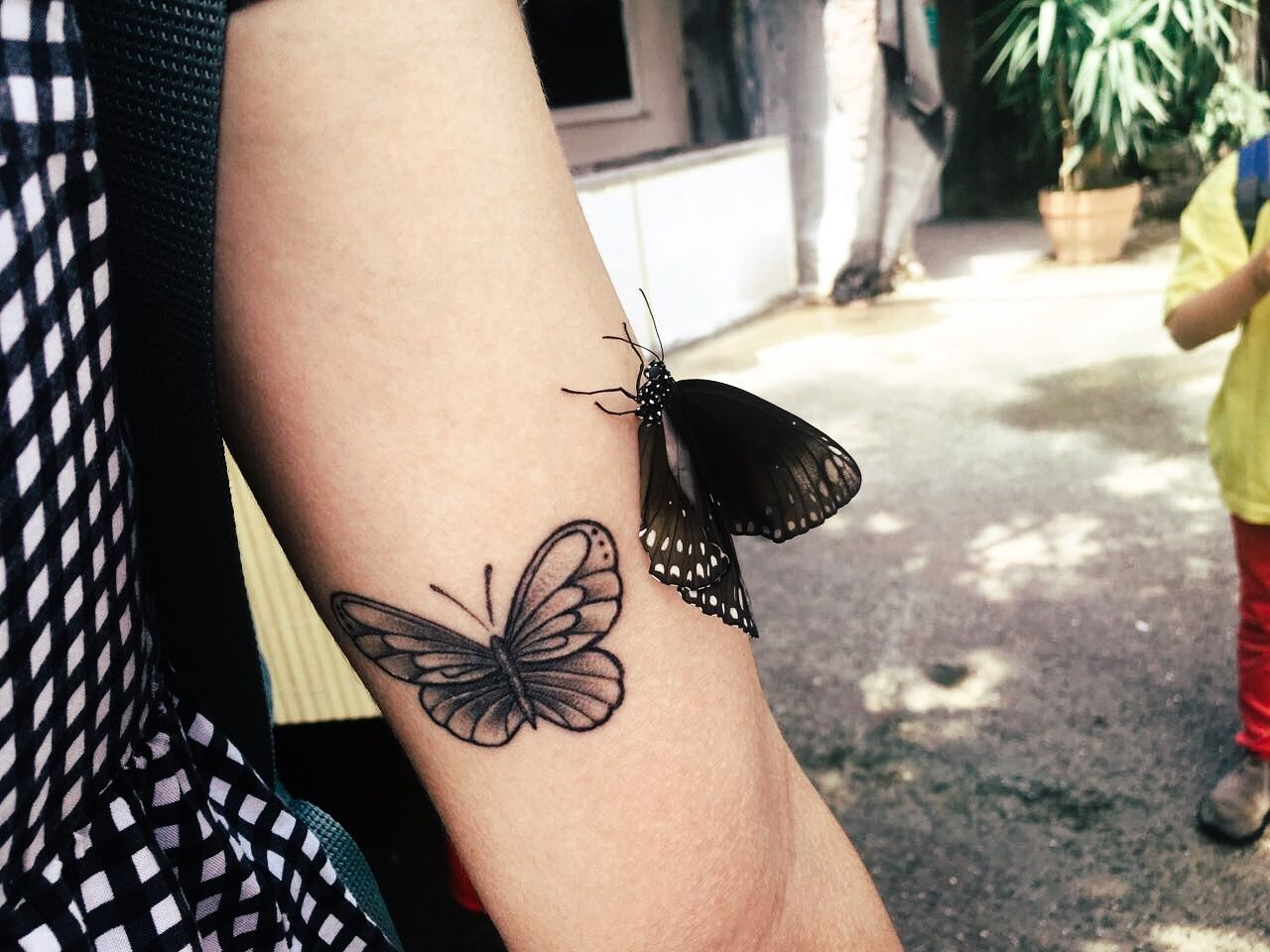 Picture by irisreeves on instagram butterfly tattoo tattoos