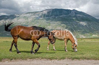 Cavalli sotto il Monte Vettore - Castelluccio di Norcia © Pietro D'Antonio