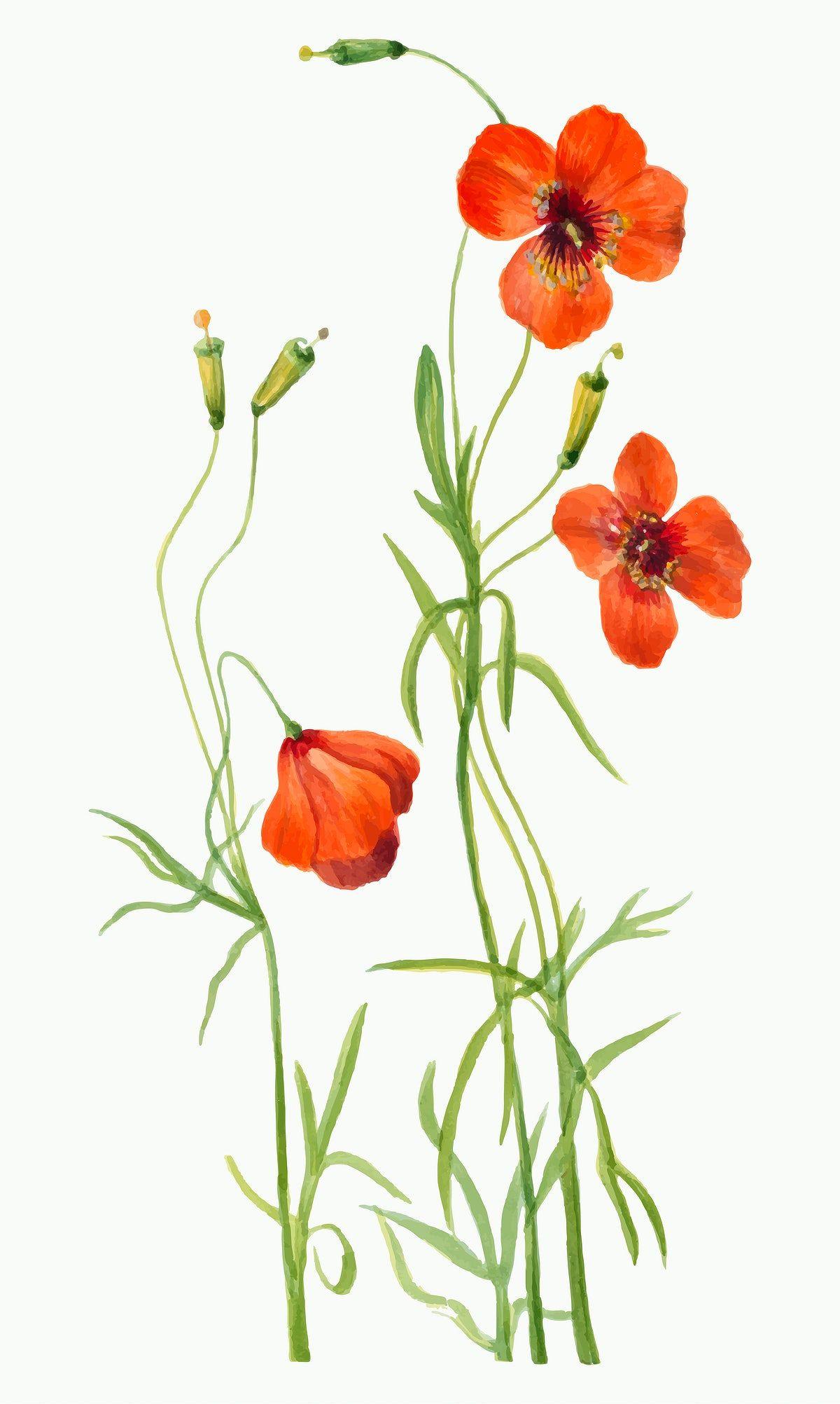Orange blossom vintage botanical illustration – Artofit