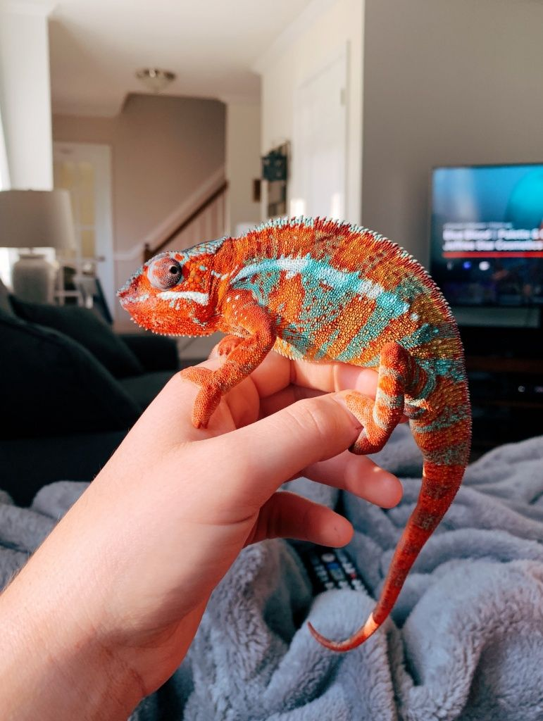 Vsco Caitymiller Images Cute Reptiles Cute Animals Chameleon Pet