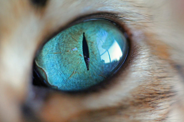 Photographer Captures The Swirling Beauty Of Her Cats Eyes Cat Eye Colors Gorgeous Cats Cats
