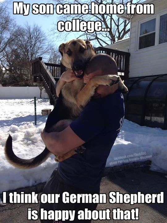 GSD hugs...best ever! #doglovers #adorable