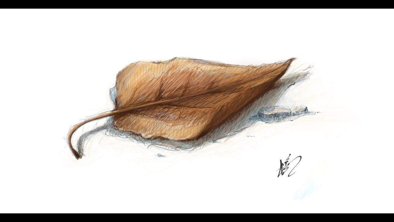تعليم رسم ورق شجر Mr Fine Artist تعليم الرسم Youtube