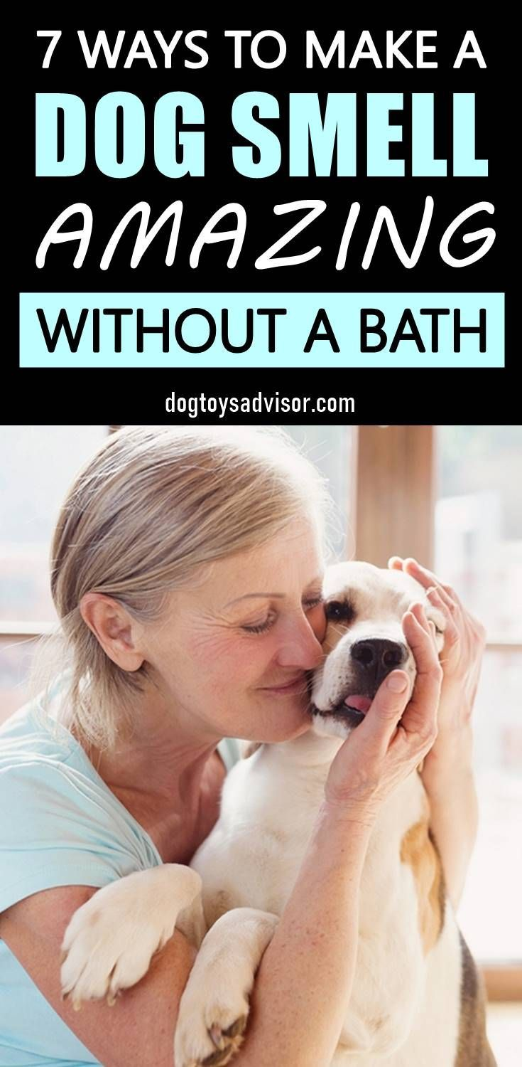 How To Make Your Dog Smell Better, 2020-1921