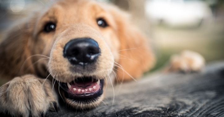 Boop Some Puppy Noses And We Ll Tell You Something Happy Dog Facts Dog Teeth Dogs