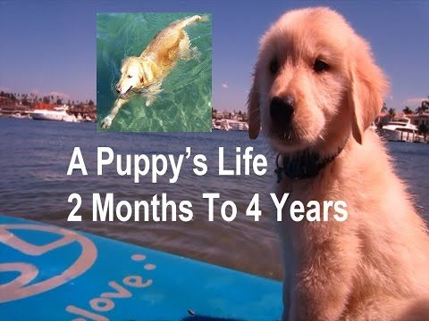 Puppy S Life Video Compilation 2 Months To 4 Years Old Super