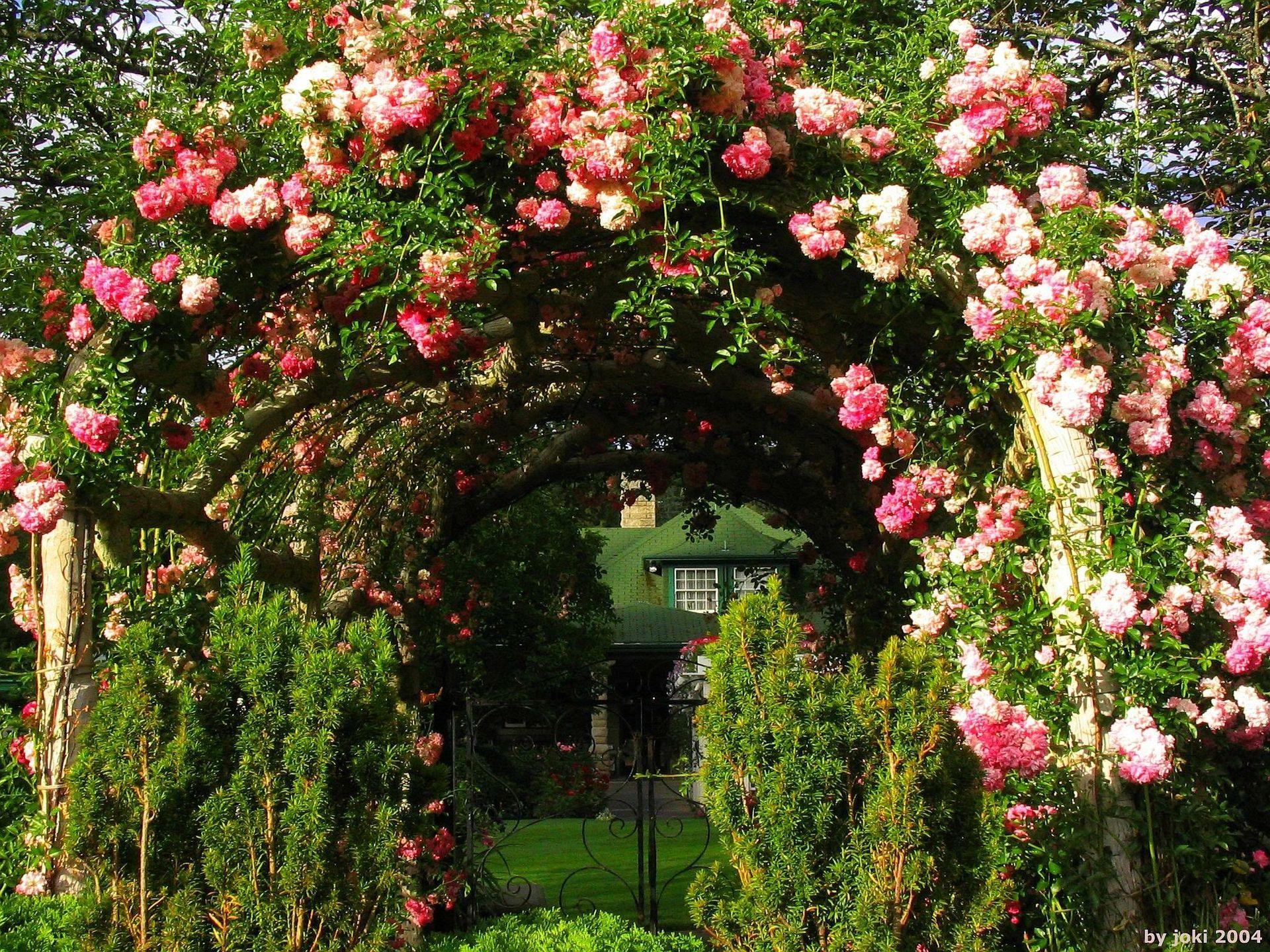 Beautiful Rose Garden Wallpaper rose garden wallpaper | garden and roses | pinterest | gardens and
