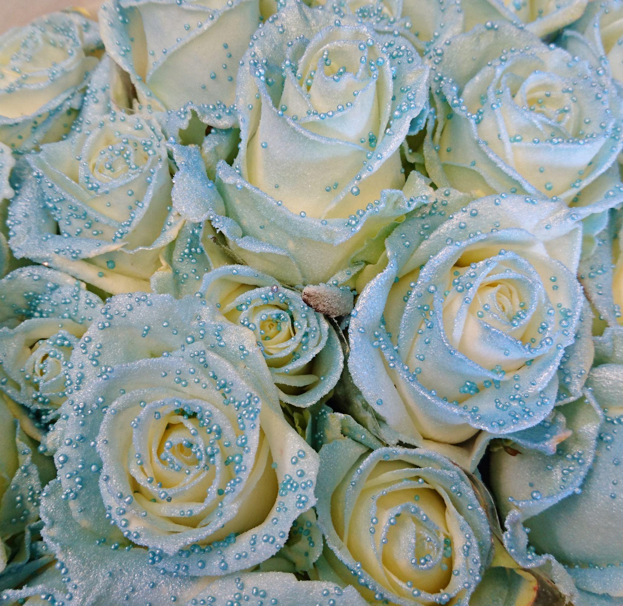Vaaleansiniset karamelliruusut #ruusut #roses #ylioppilaat