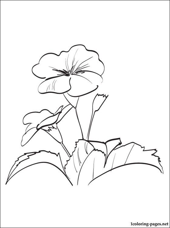 Evening Primrose Coloring And Printable Page Flower Sketches Flower Coloring Pages Watercolor Postcard