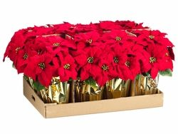 15 Artificial Poinsettias In Gold Wrapped Pot 1 Dozen Holiday Arrangements Stems Holiday Arrangement Gold Wrap Silk Flowers