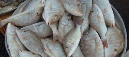 صيادين السمك ارتفاع أسعار المواشي ينعش سوق السمك برأس الخيمة Fish Places To Visit