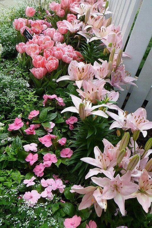 Pin by Serap Onan on cicekler | Pinterest | Gardens and Flora Designing A Lily Garden on design your garden, japanese zen garden, flower garden, designing an office,