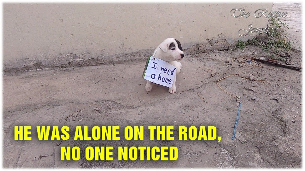 Lonely Puppy Waits On Street For Someone Who Can Take Him Home