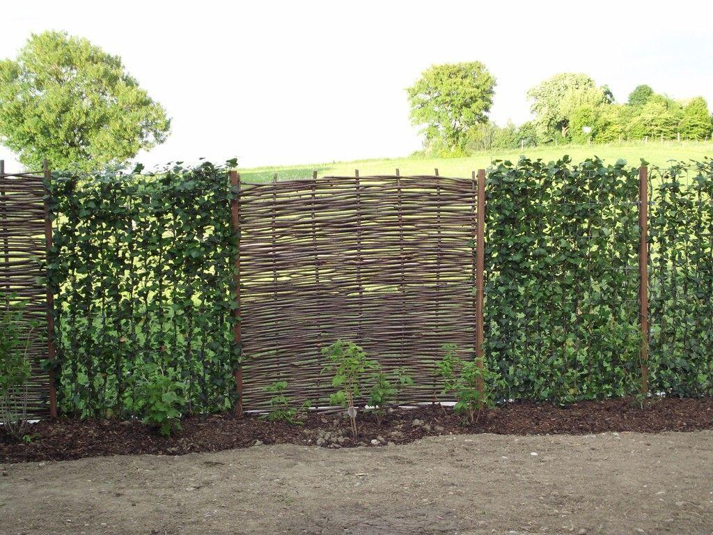 Haselnuss Bepflanzung Gartengestaltung Garten