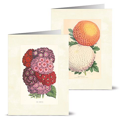 Vintage Flowers - 36 Note Cards for ... http://www.amazon.com/dp/B00PVBGHDC/ref=cm_sw_r_pi_dp_RhiEvb0VXYT48