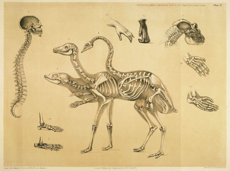 Anatomia animal comparada | Pinterest | Anatomía, Anatomía animal y ...