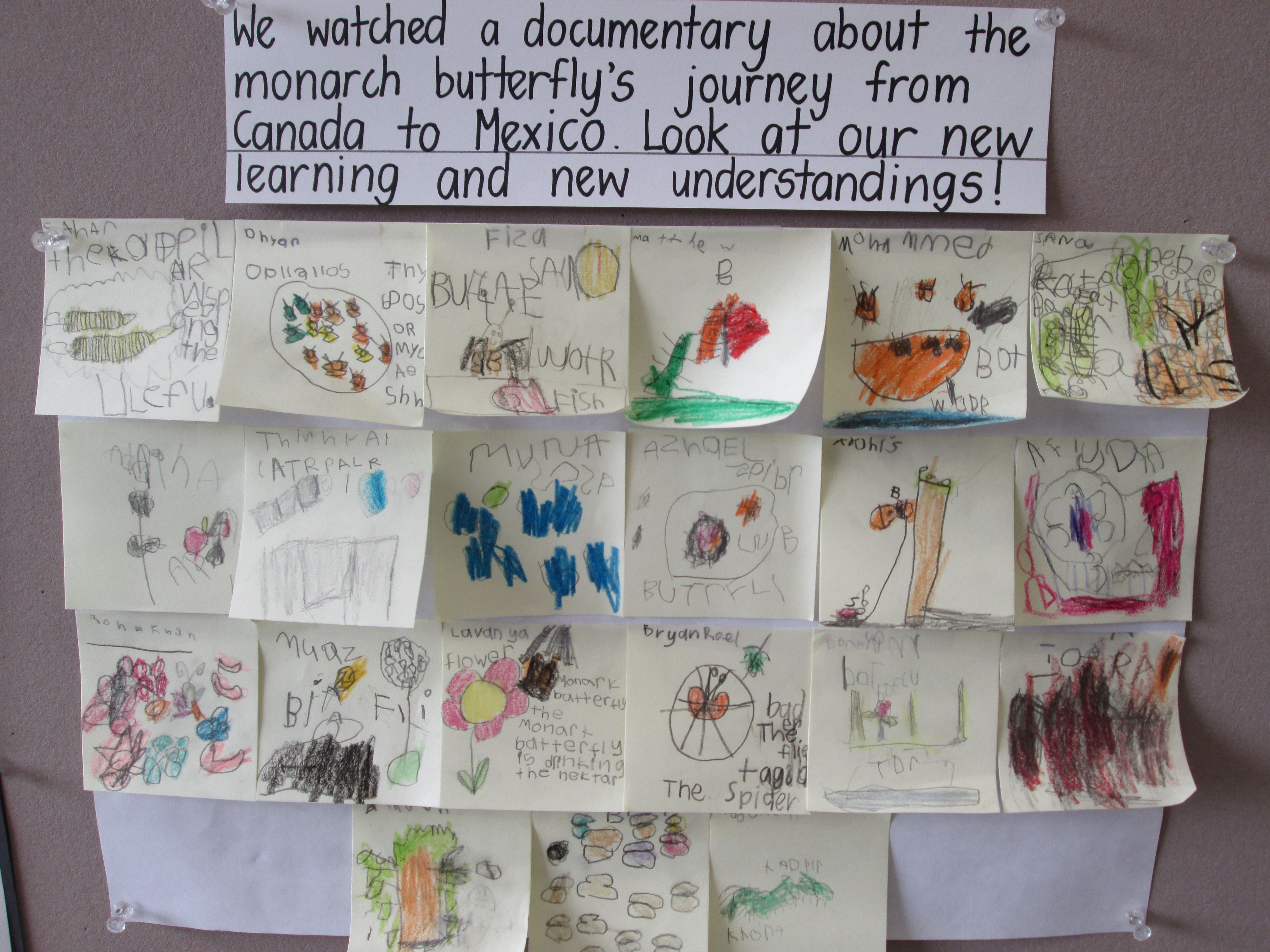 Butterfly Inquiry