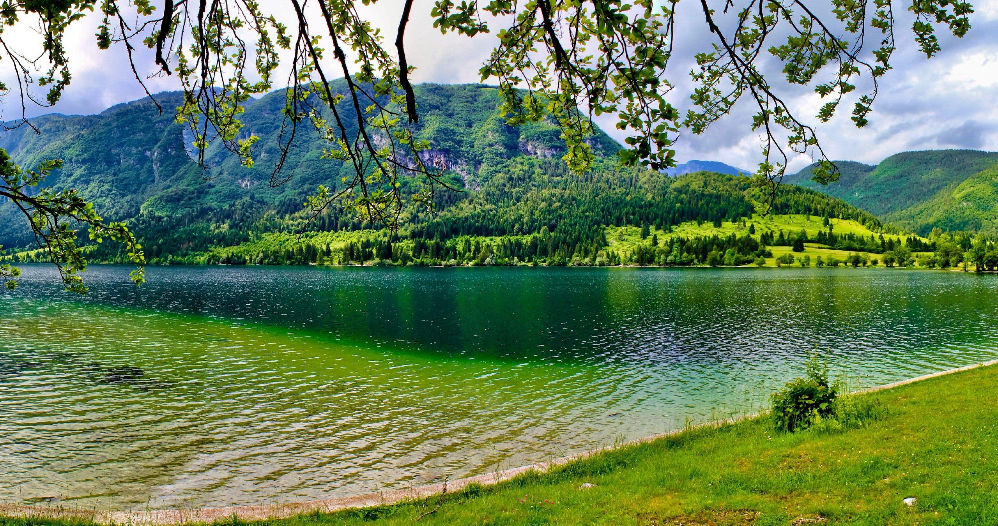 Ultra Hd Wallpaper 4k Green Mountains Natural Trees: Slovenia Bohinj 4k Ultra Hd Wallpaper