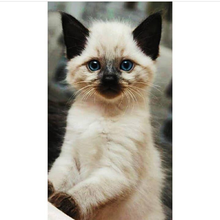 النصر اكسبلور الشرقيه الجوف مول الهلال افتارات اكسبلور 2020 الجوف الرياض حايل حائل حب الاهلي افتار الخبر الات Cat Day Cats I Love Cats
