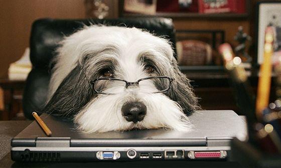 Em dia de fúria, chame o seu cachorro - http://marketinggoogle.com.br/2014/01/31/em-dia-de-furia-chame-o-seu-cachorro/