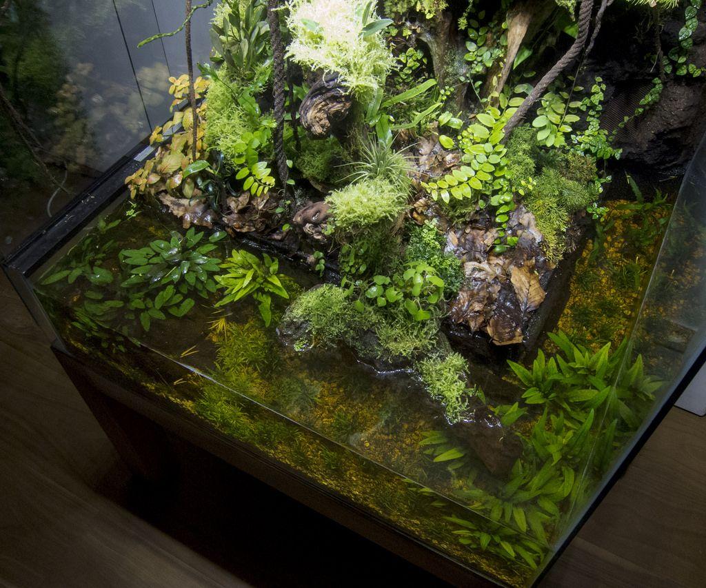Click the image to open in full size aquaterrarium pinterest