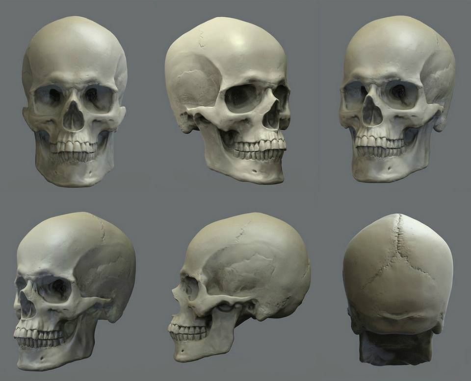 Pin de Ian Thompson en Anatomy Reference | Pinterest | Tutoriales y ...