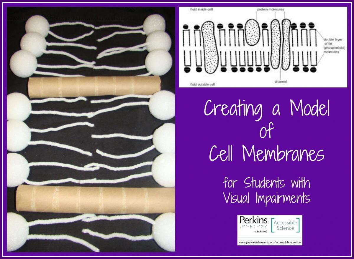 Cell Membrane Model Cell membrane, Science cells, Plasma