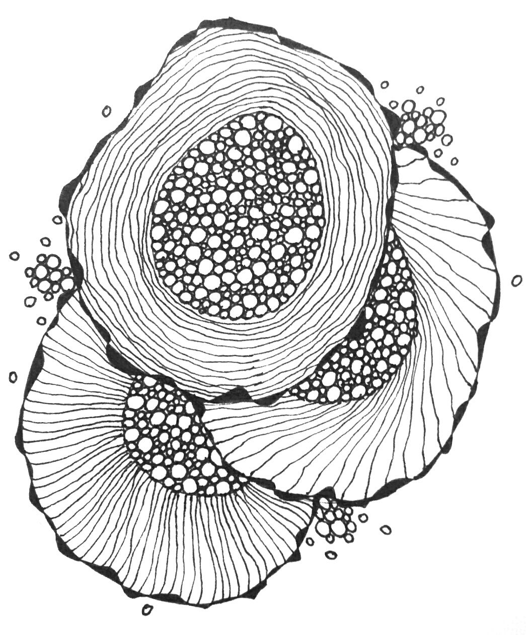 abstract pen and ink drawing by mary dusek