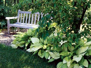 Shade Landscaping Plans | Shade Gardens | 4 Steps To A Perfect Shade Garden  Design