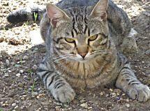 Come il gatto sceglie il suo umano | Per appassionati di gatti