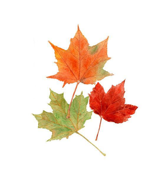 Autumn Leaves Watercolor Sini Ezer Arbres En Aquarelle