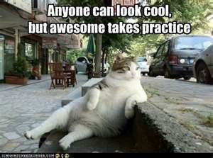 cat anyone can look cool, but awesome takes practice