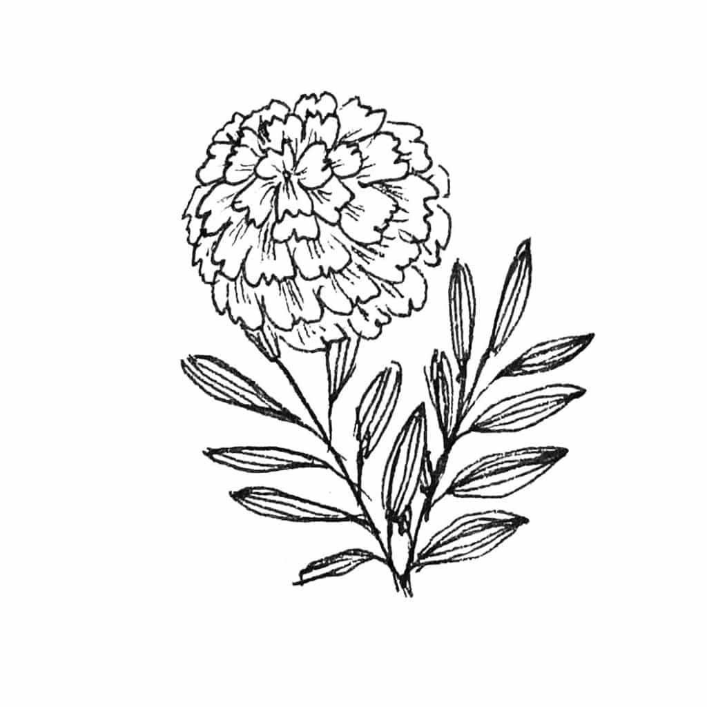 zentangle®  doodle inspirierte blumen  bunte galerie in