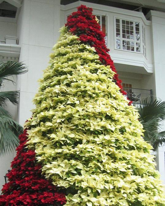 Poinsettia Tree - Opryland Hotel, Nashville