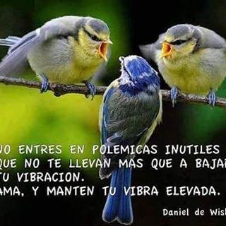 Juan Pablo Garces Jpgrcoach Fotos Y Videos De Instagram In 2020 Pretty Birds Pet Birds Little Birds