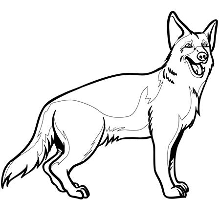 dessin chien berger allemand a colorier