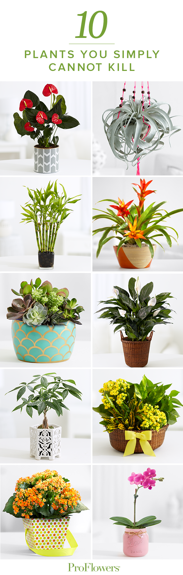 68ff72589c9567 You may not have a green thumb…but you can certainly look like you do!  Check out this list of 10 plants you can't kill!