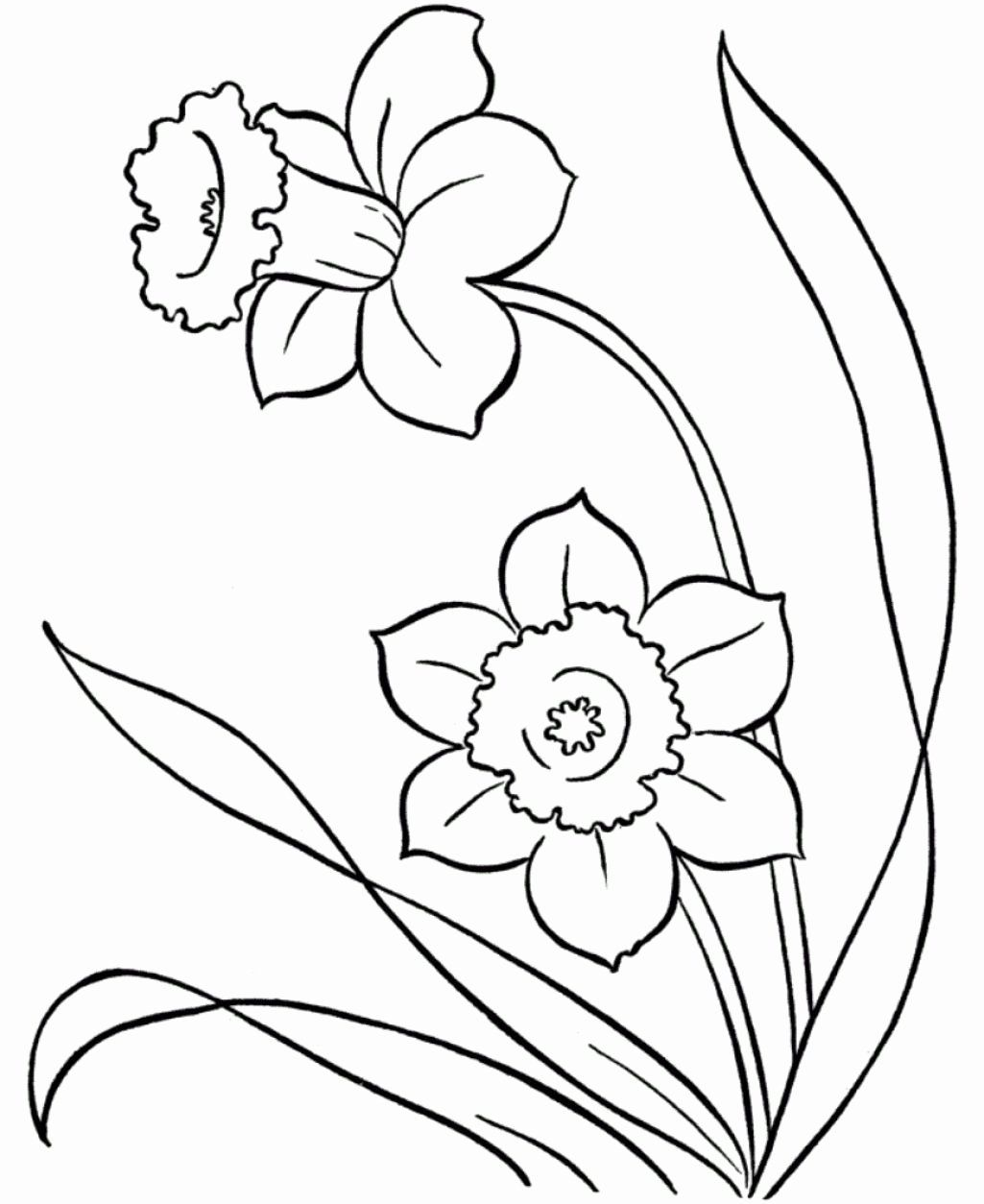 Alabama State Flower Coloring Page New Beautiful Bird Paradise Flower Coloring Page Nicho In 2020 Spring Coloring Pages Flower Coloring Pages Flower Drawing