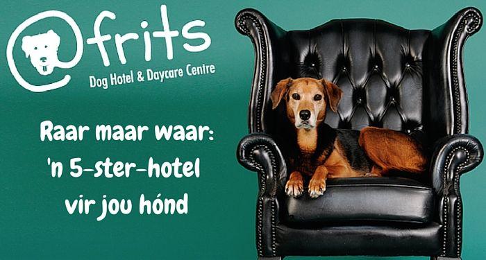 Die eerste Hondehotel in Kaapstad! Hondehotel in Kaapstad is 5 sterre werd!