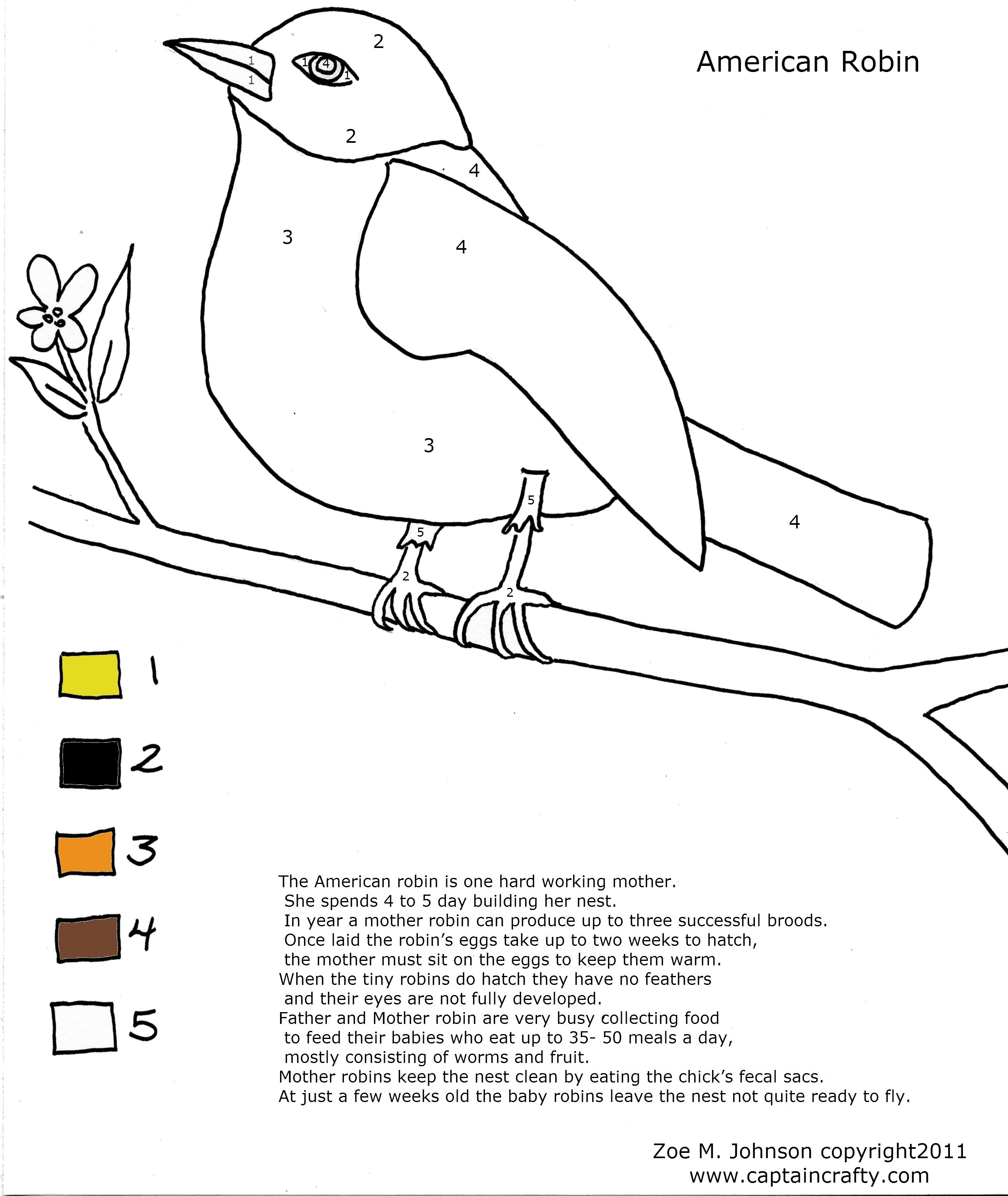 bird coloring pages for modg 4th science robin nature coloring sheetjpg 24802940