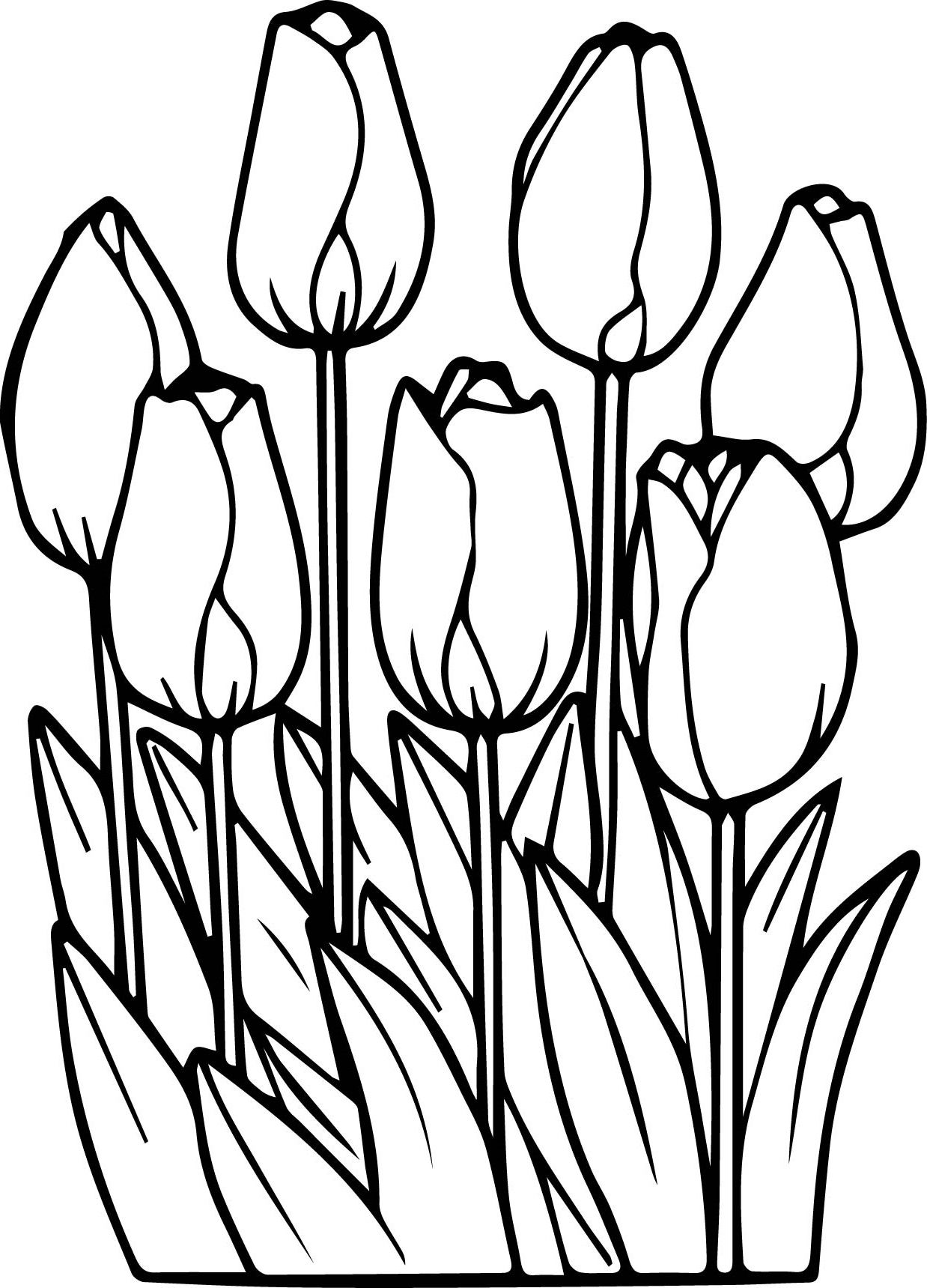 Printable Tulips Flower Coloring Pages