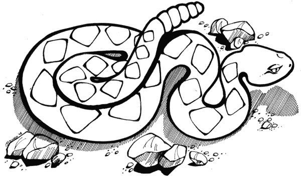 Rattlesnake Coloring Pages Snake Coloring Pages For Free
