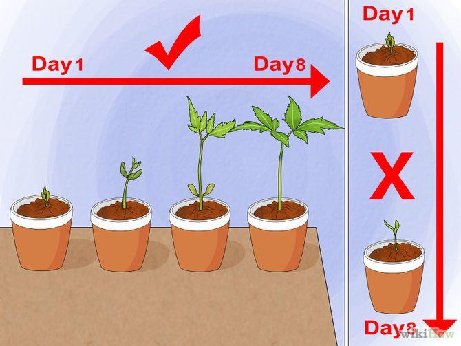Grow A Sunflower In Pot