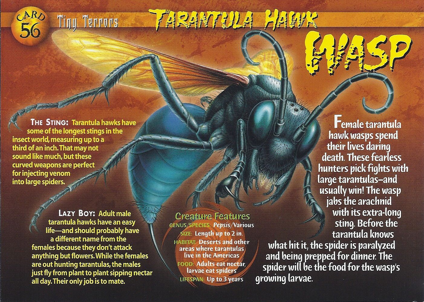 Pin By Jay Jourdan On Winged Tarantula Hawk Wasp Wild