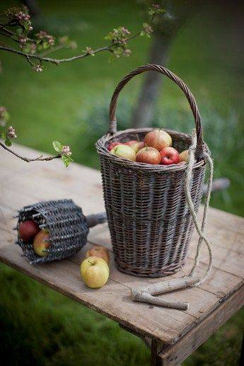 Collecting apples in a basket