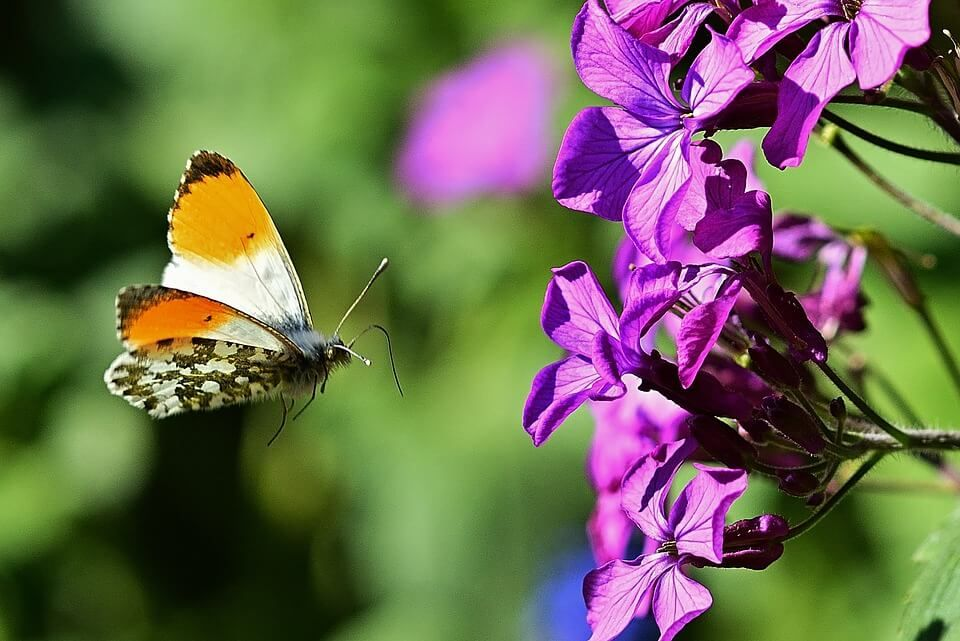 Hd Nice Color Butterfly Desktop Wallpapers Full Screen In 2020 Beautiful Butterfly Images Nature Butterfly Wallpaper