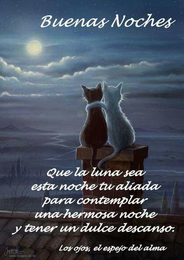 Dulces Suenos Para Todos Dulces Suenos Buenas Noches Gatos
