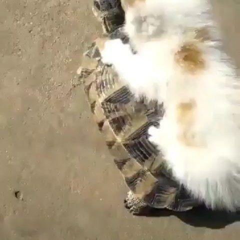 Top 5 Cat Videos We Saw On Instagram This Week