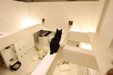 猫仕様の家 リビング編 猫生活まみれ風味 16匹のねことチョット人 猫の家具 家 ねこ インテリア