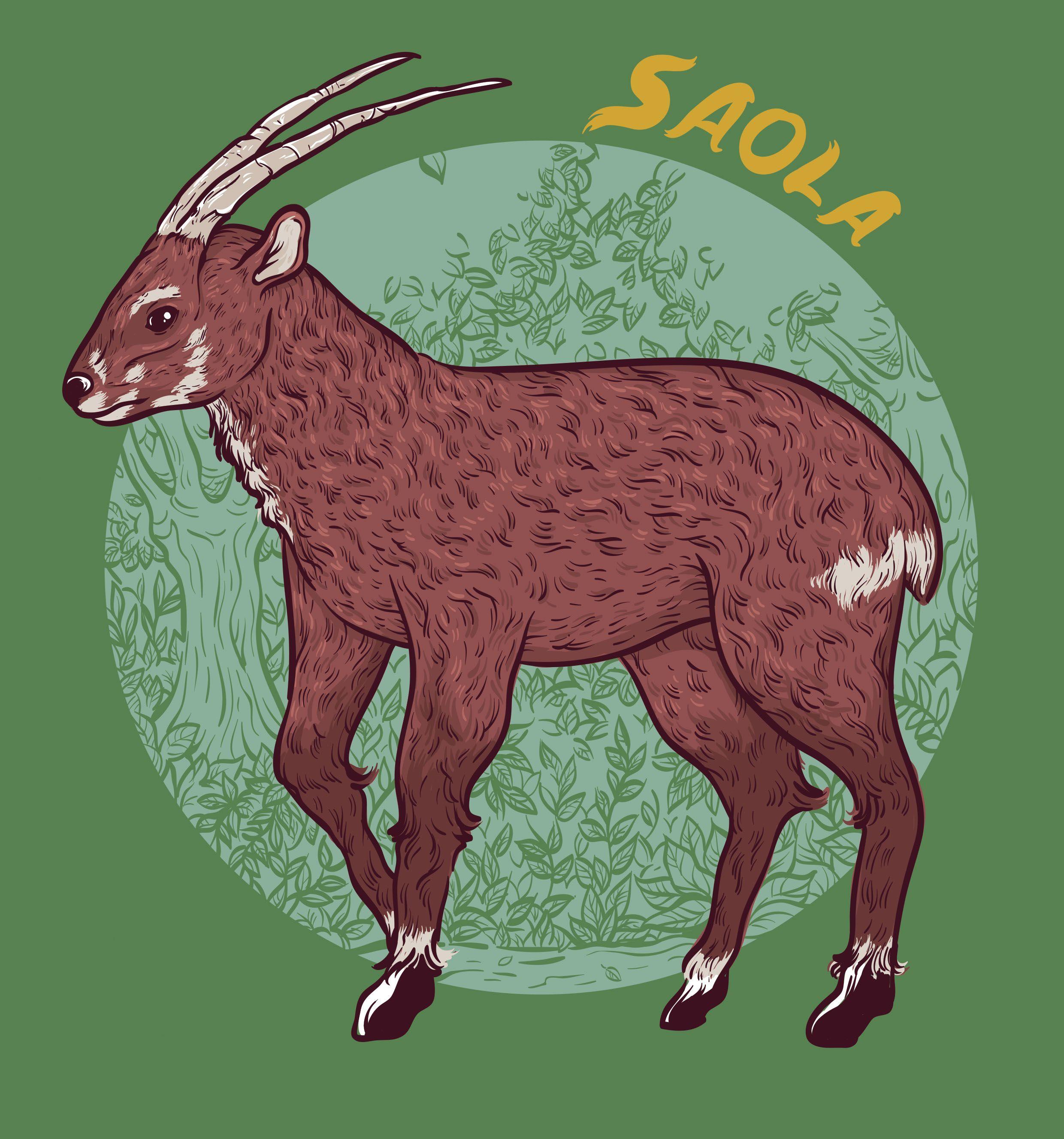 Saola Endangered Species on Behance Andy Alvez Saola